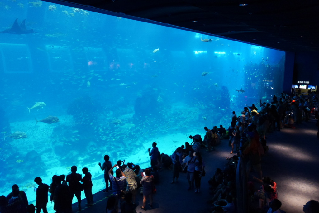 Best things to do in Singapore | Best Cities | Singapore | S.E.A Aquarium