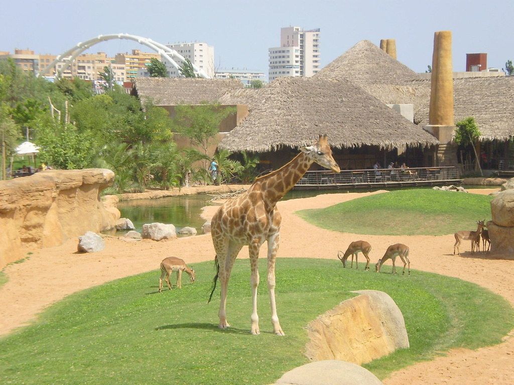 Best Things to do in Valencia | Bioparc Valencia