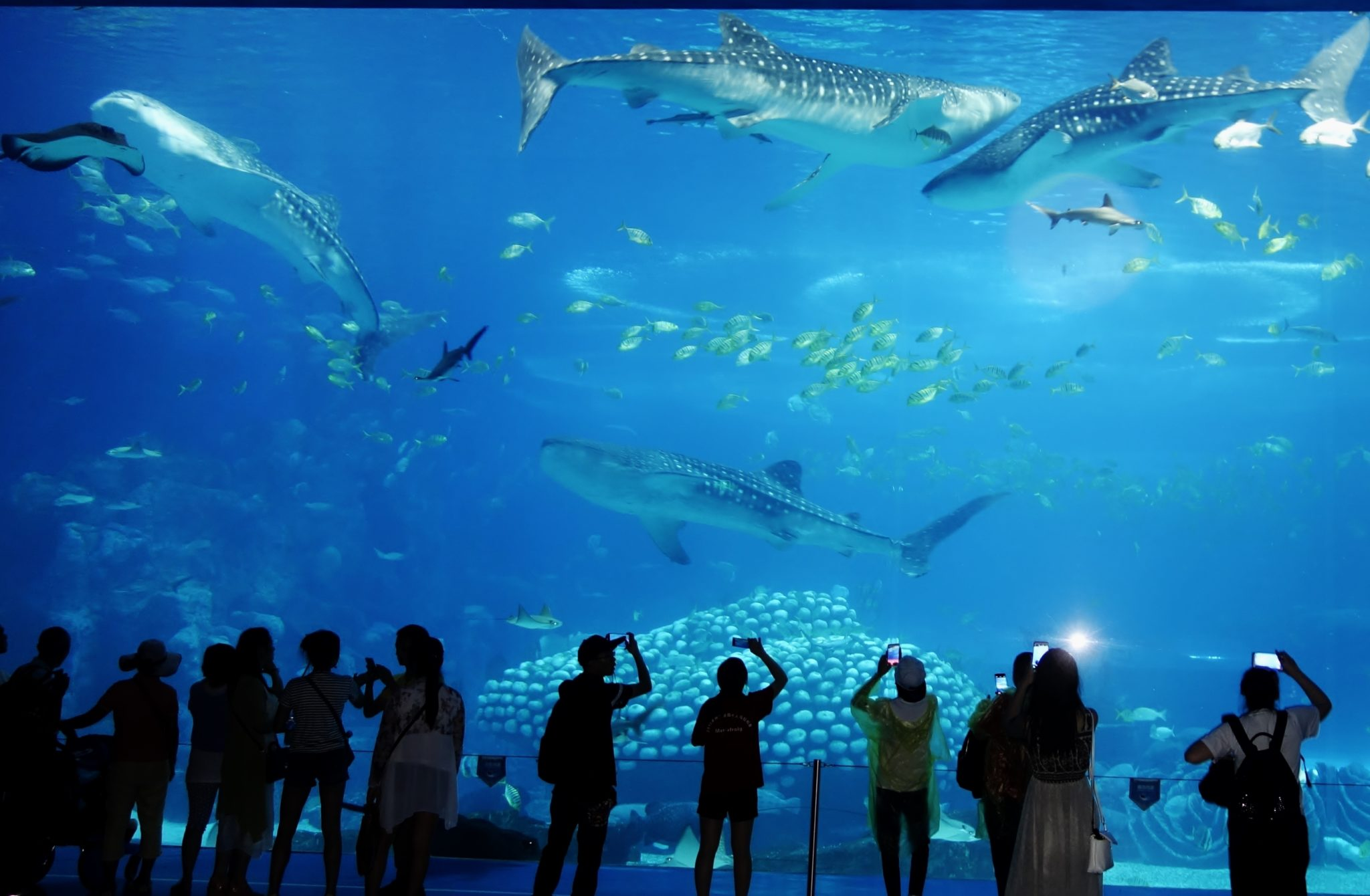 Largest And Best Aquariums In The World 2017 Top 10