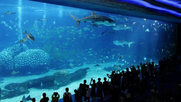 best aquariums in the world top 10 world cities ranking bonus list