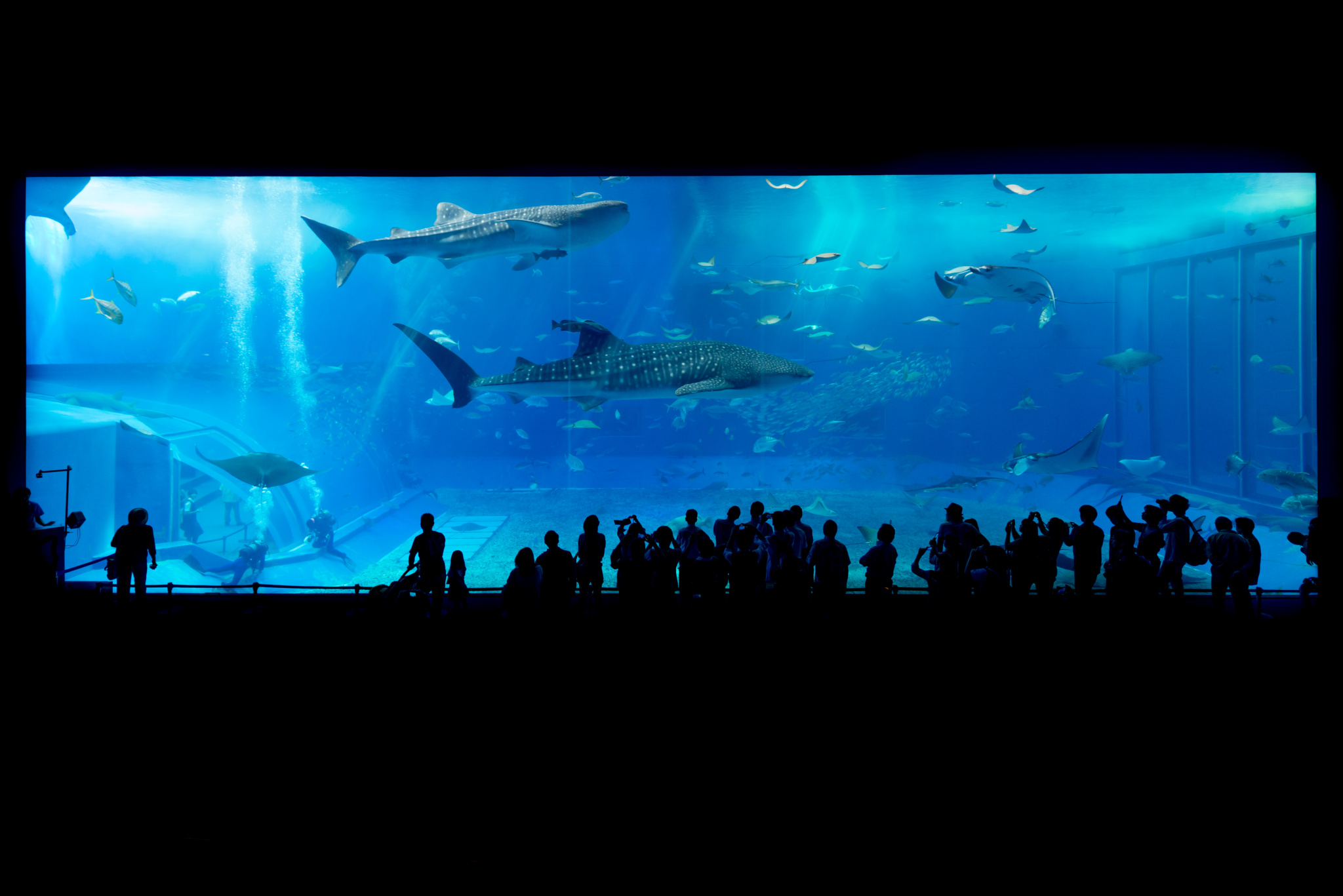 Best aquariums in the World 2017 | Churaumi Aquarium Main Tank | Wordcitiesranking.com