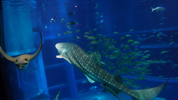 Best Aquariums in the World (Top 10) | World Cities ...