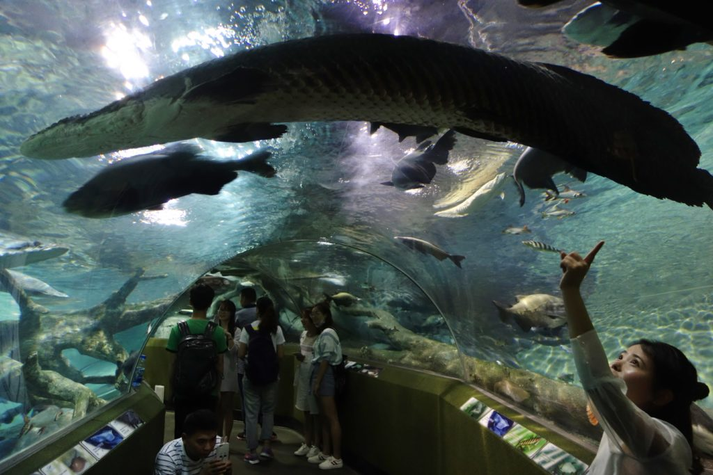 Largest and best aquariums in the world 2018 top 10 for Oceanic fish tanks