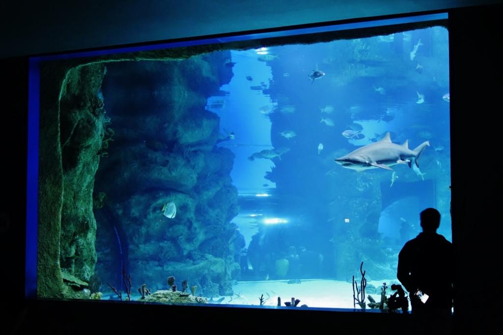 Largest and best aquariums in Europe, Moscow Oceanarium — Moskvarium (Московский океанариум)