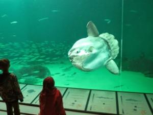 Best Aquariums in Europe, Nordsøen Oceanarium
