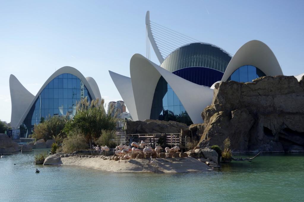 Things to do in Valencia | Best Cities | No. 24: Valencia | Oceanogràfic (aquarium)