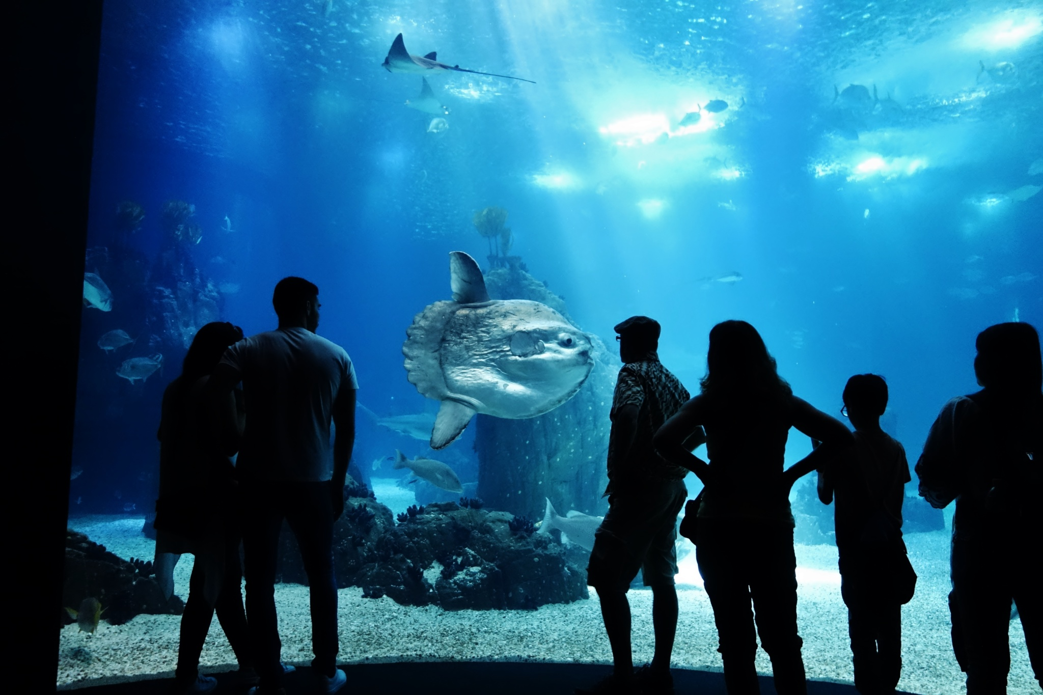 Largest and Best Aquariums in Europe 2018 (Top 10 ...